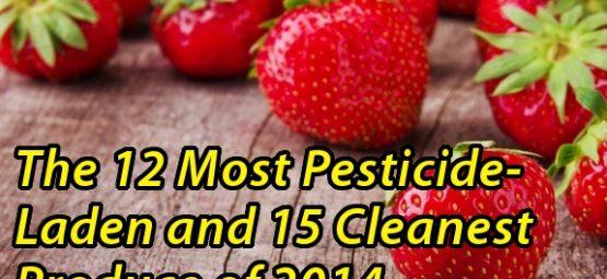 dirty dozen strawberries