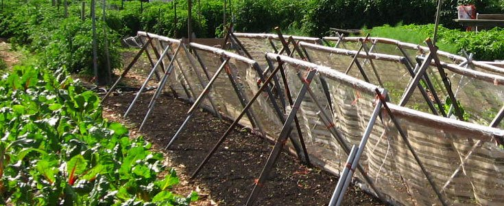 sustainable-rooftop-farming
