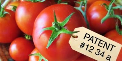 patented tomato