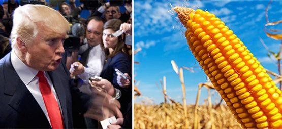 Donald Trump and GMOs