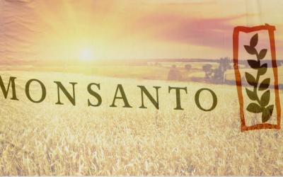 usda-monsanto-wheat-experiment