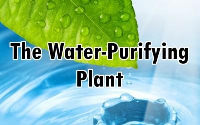 moringa water